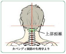 上部頸椎の位置