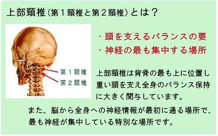 上部頸椎の解説
