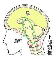 上部頸椎の部位